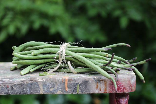 snake beans