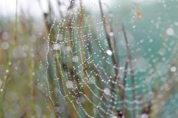 daps web