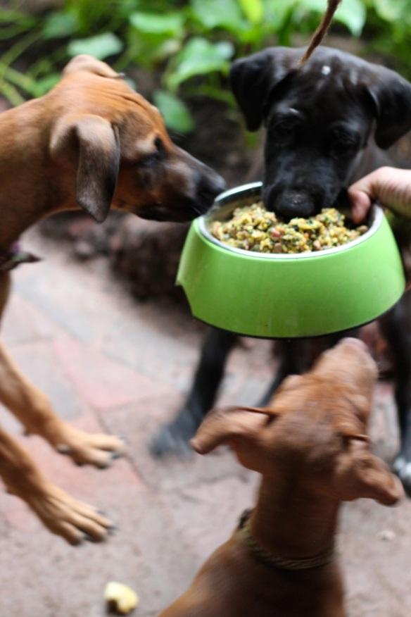 dog dinner launch