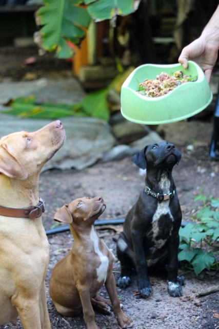 dog dinner sit