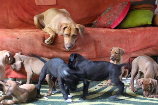 sofa chaos