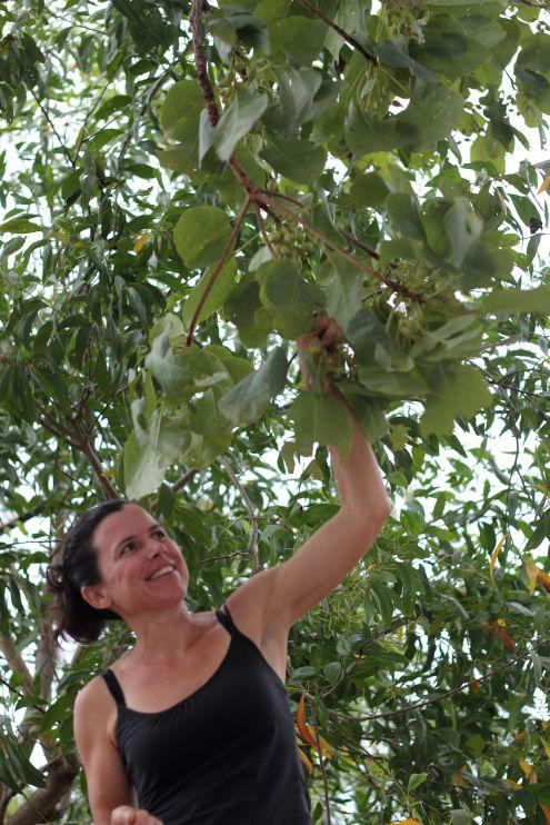 Cassi plums