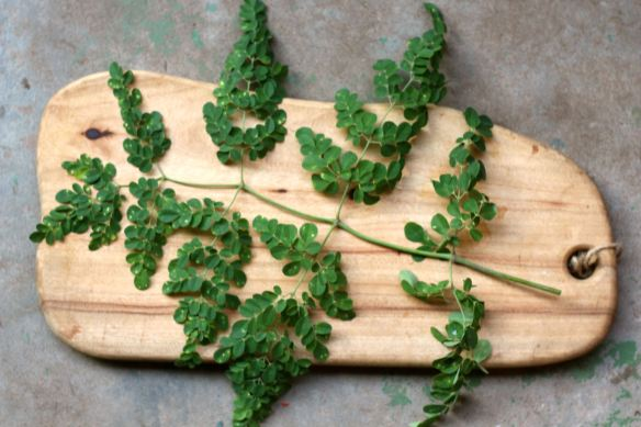 moringa board Moringa and diabetes ] the real cause of  what this means is the general conventional treatment plan used along the board to diabetic treatments in order to.
