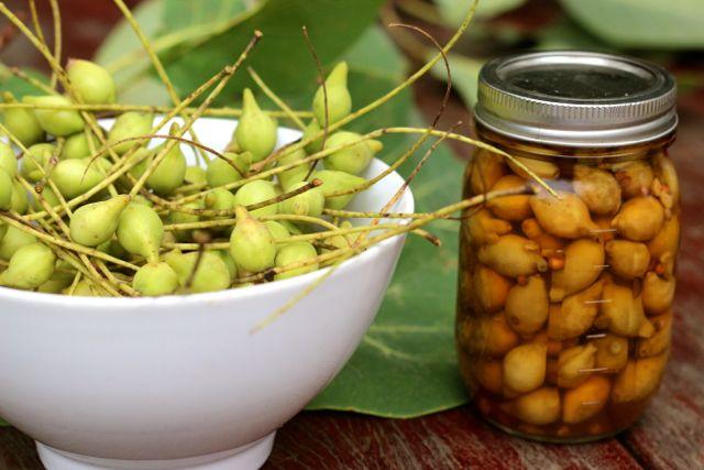 Pickled Kakadu plums